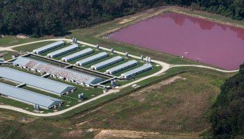 factory farm aerial