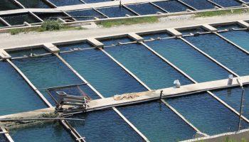 fish farm aerial
