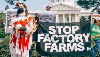 stop factory farms