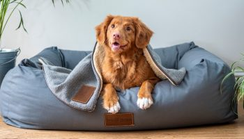dog in a bed