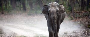 elephant on dustry road