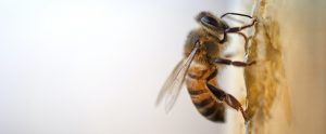 bee on a wall