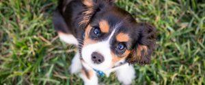 cute puppy in the grass