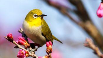 yellow bird in trees